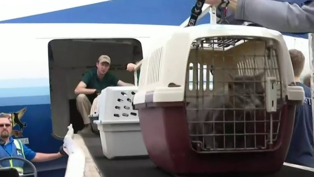 Michigan Humane Society takes in pets from path of Hurricane Dorian
