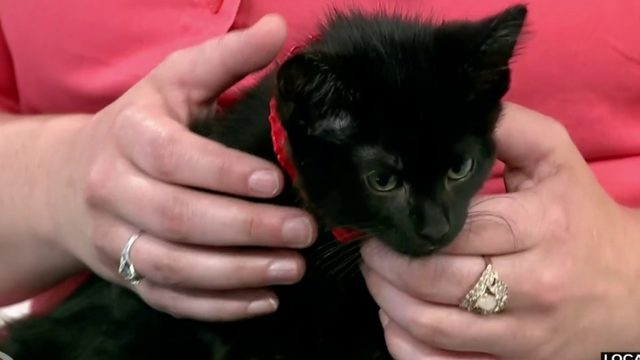 There's a new event to help support animals in the D