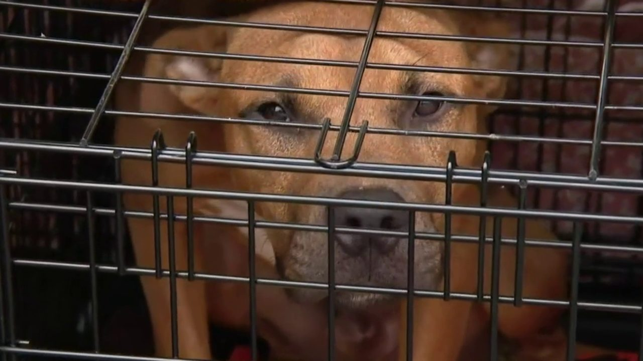 Residents can help animals shelters affected by Hurricane