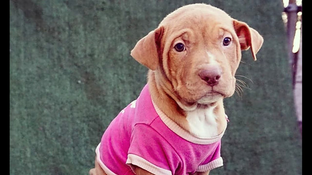These Detroit-based puppies are up for adoption