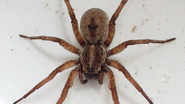 Why you're seeing so many spiders in Michigan right now