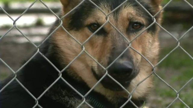 Royal Oak Animal Shelter faces budget crisis