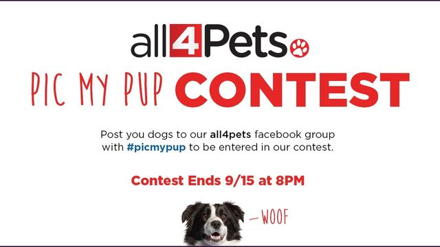 All 4 Pets 'Pic My Pup' contest