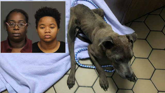 Women charged with animal cruelty after injured, malnourished dog found…