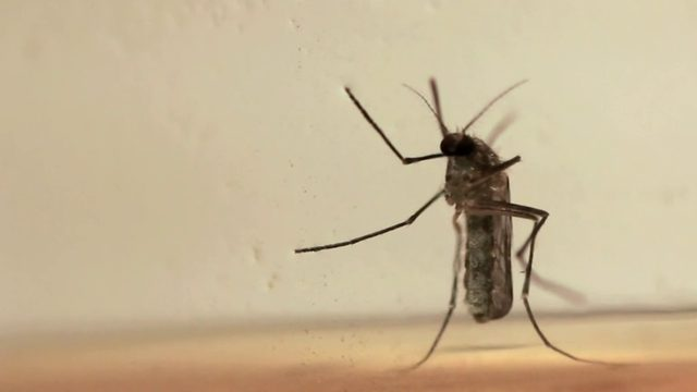 Another human case of mosquito-borne EEE confirmed in Michigan
