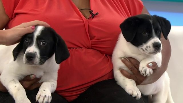 Pets of the Week: Basil and Cilantro