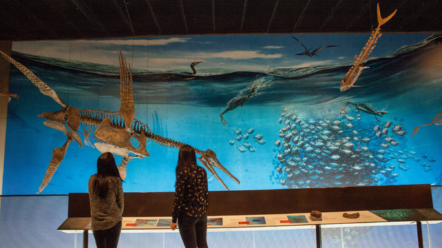 University of Michigan Museum of Natural History to debut new exhibits…