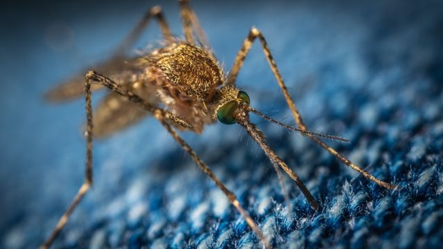 Michigan health officials urge 'protect yourself' from mosquito bites this fall