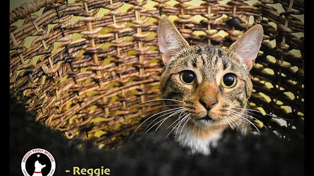 3 cool kitties to adopt now in Detroit