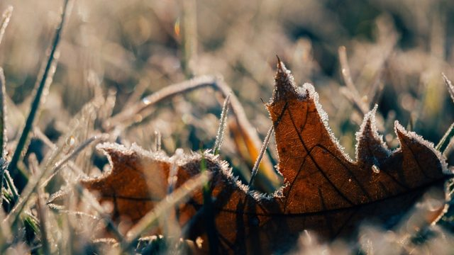 SE Michigan under frost advisory Tuesday morning