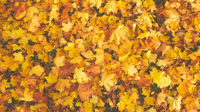 Why you should stop raking your leaves