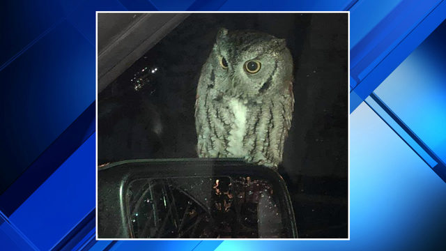 Who is that? Ann Arbor police officer has special guest visit her