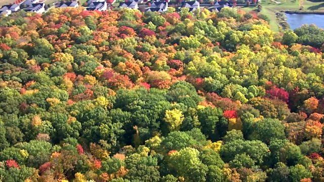 VIDEO: Stunningly beautiful fall foliage in southeastern Michigan